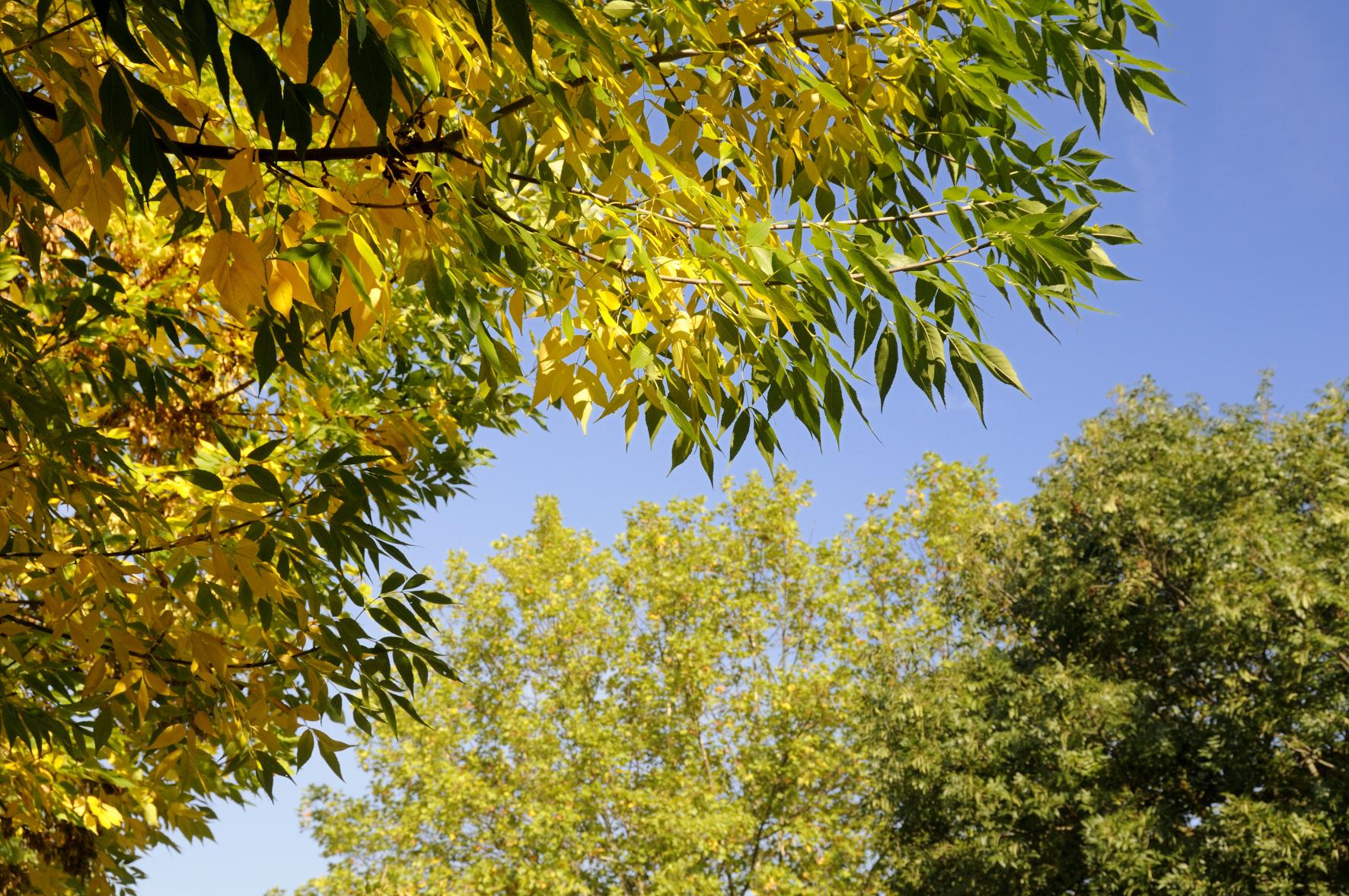 Feuilles automne 2 arbre nature toute image - Image feuille automne ...