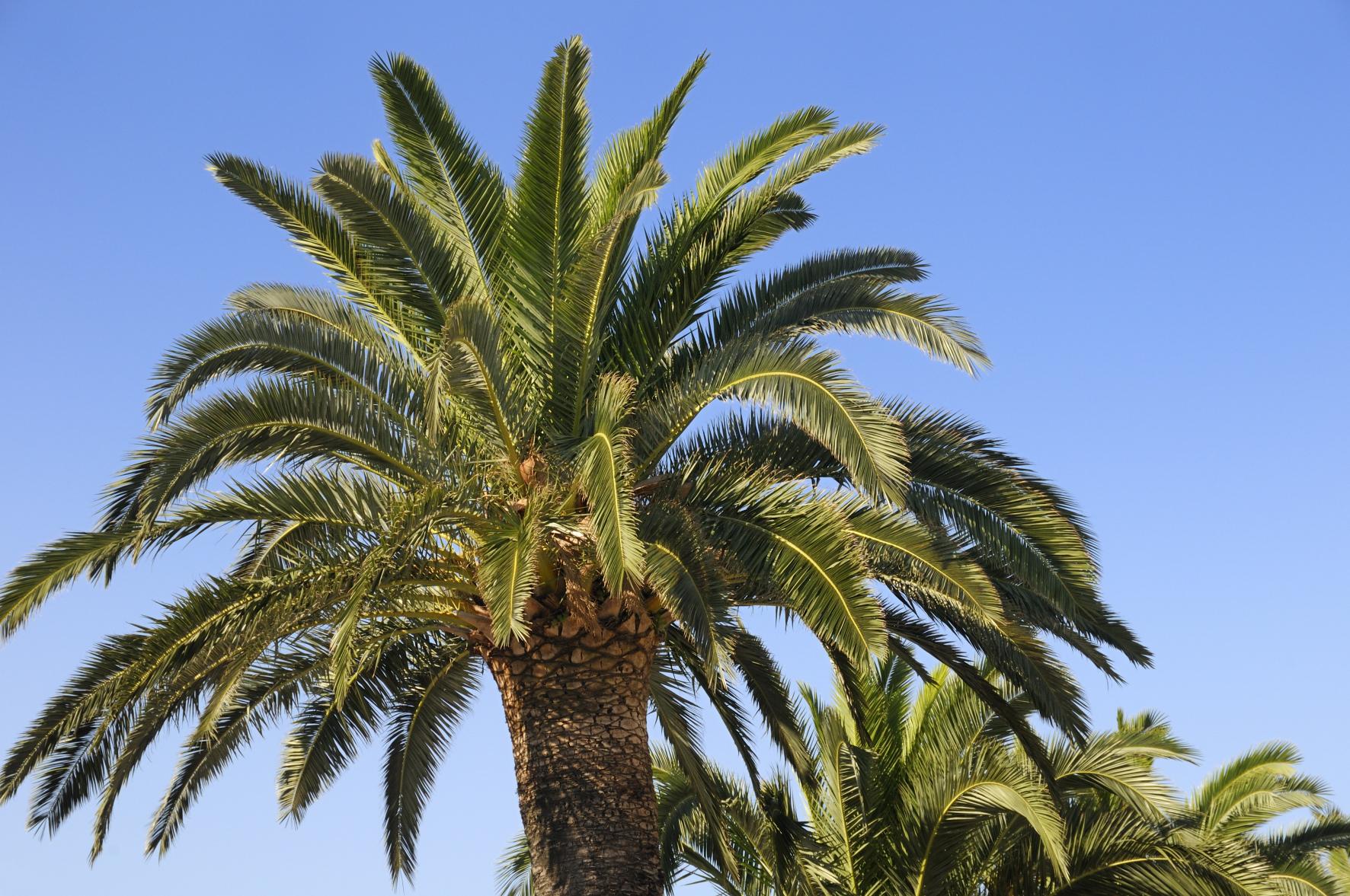 Palmier 2 plage vacance loisir concept toute - Image palmier ...
