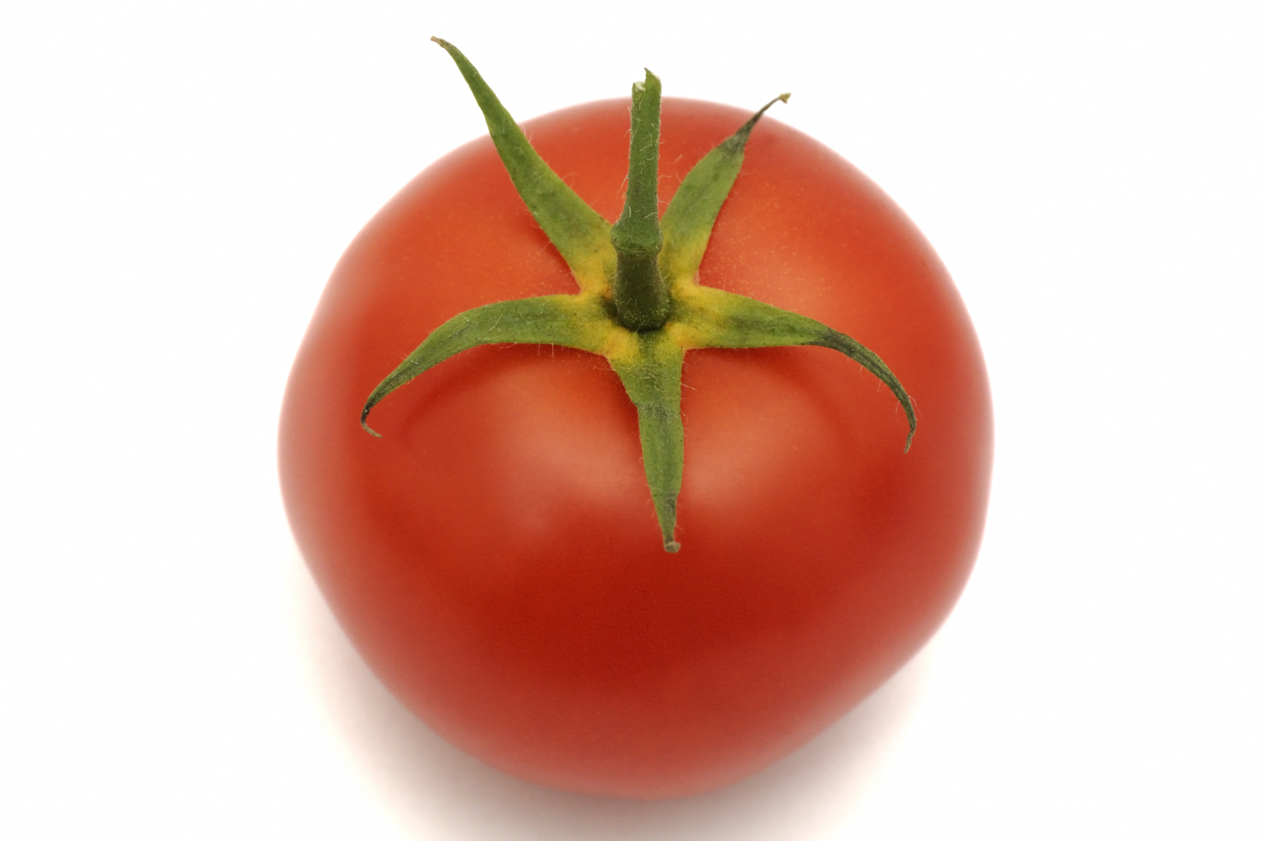 Tomate | www.imgkid.com - The Image Kid Has It!