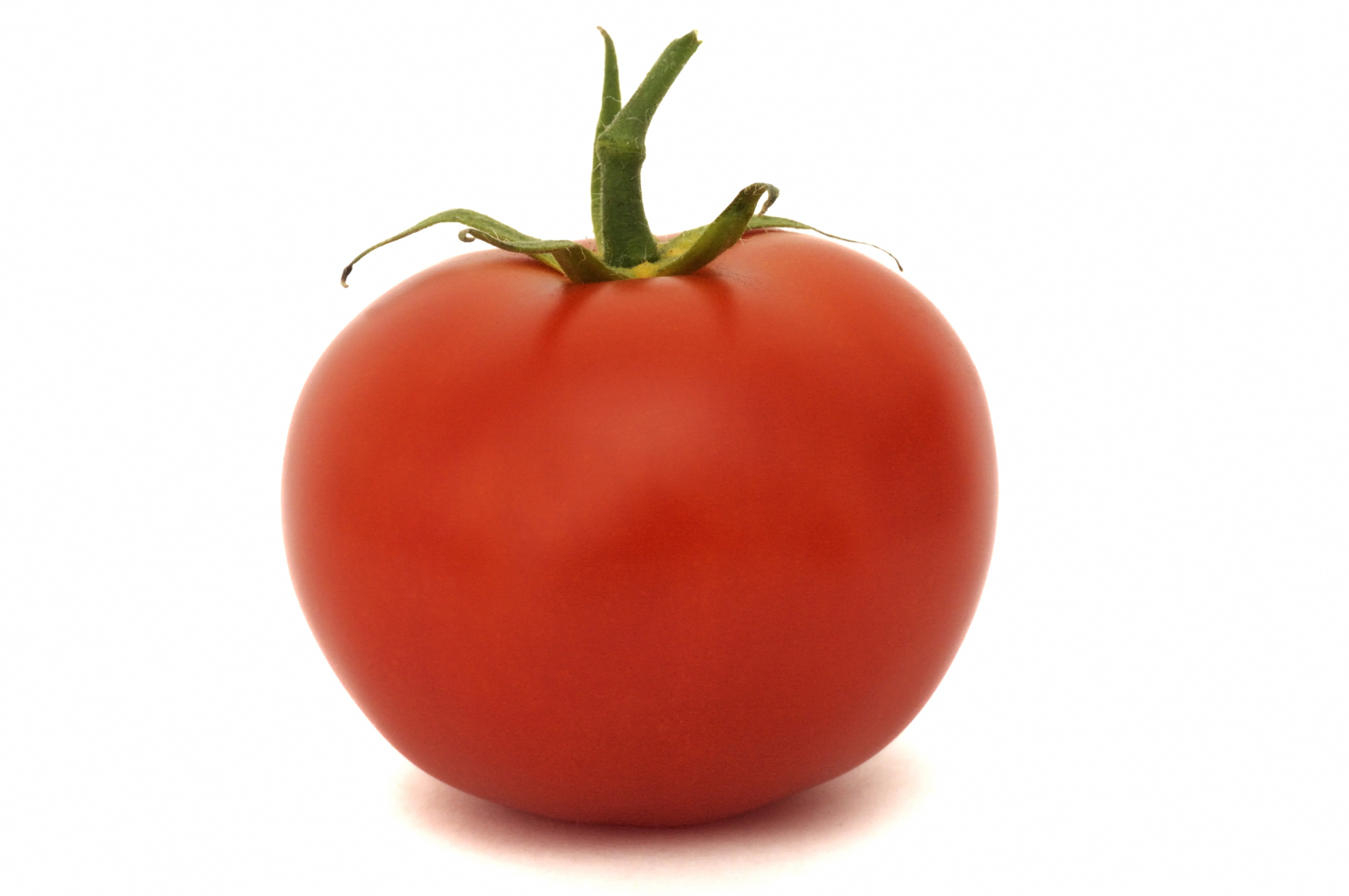 Tomato #7 | Fruit | Food | Food | All image | Niffylux ...
