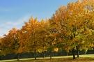 Arbre automne #11