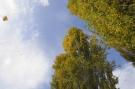 Arbre automne #7