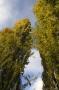 Arbre automne #8