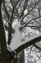 Arbre neige #2