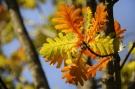 Feuilles automne #3