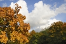Feuilles automne #13