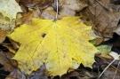Feuilles automne #14