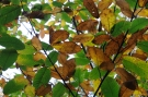 Feuilles automne #16