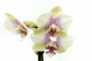 Fleur #10