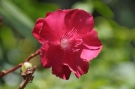 Fleur #7
