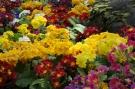 Fleurs #19