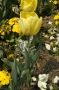 Fleurs #23