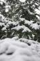 Sapin neige #6