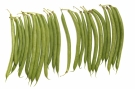 Haricots verts #8