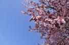 Branches arbre printemps #4