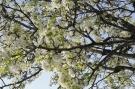 Branches arbre printemps #6