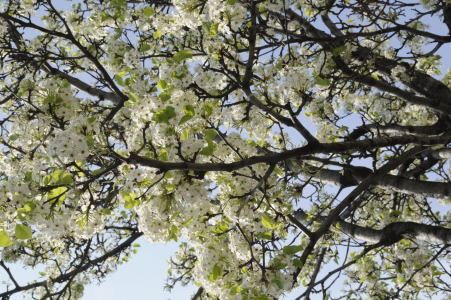 nature branches arbre printemps 6. Black Bedroom Furniture Sets. Home Design Ideas