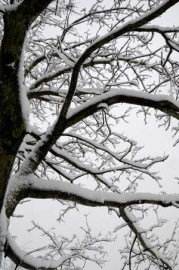 Branches arbre neige #2