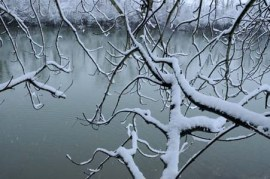 Branches arbre neige #4